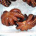 24_octopus