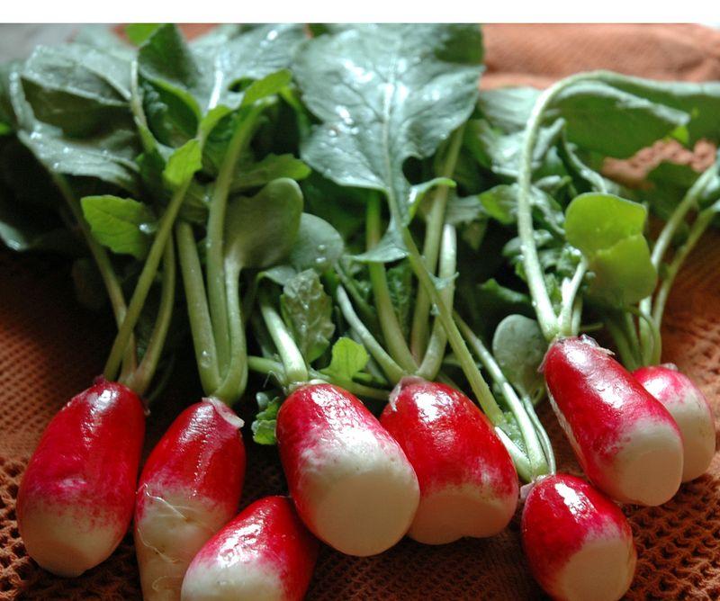 Kitchen radishes