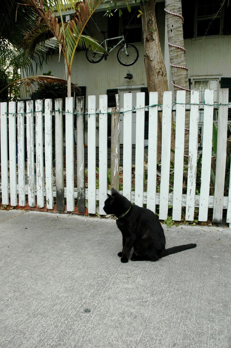 Black Cat outside EB house