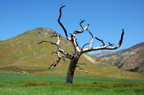 Lone_tree_in_the_valley