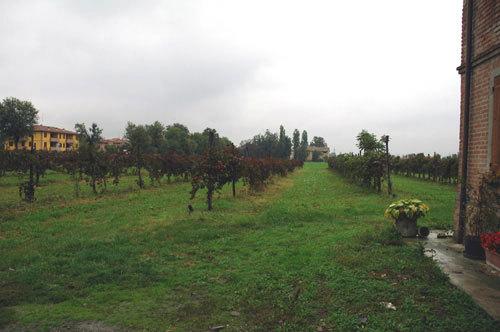 2_vineyards